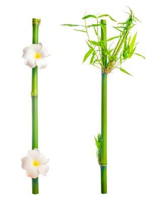 Sticker tiges de bambou avec des feuilles et fleur de frangipanier est isolé sur