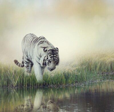 Sticker Tigre Blanc