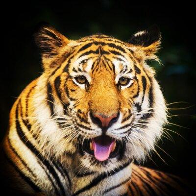 Sticker Tigre, portrait, bengale, tigre
