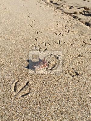 Timbres d'oiseau et une coquille sur la plage de sable