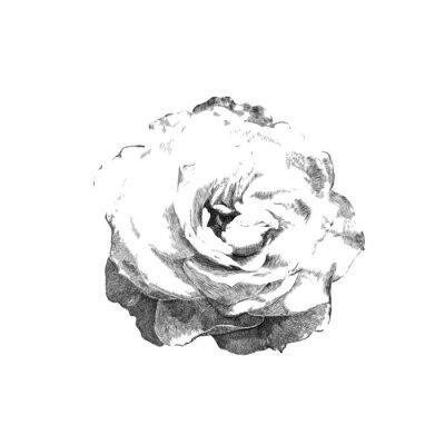 Sticker tiré rose