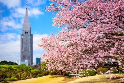 Sticker Tokyo, Japon au parc Shinjuku Gyoen au printemps