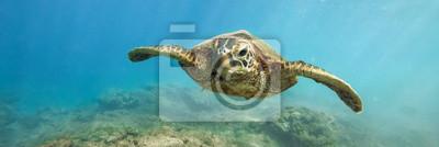 Sticker Tortue verte au-dessus d'une photographie sous-marine de récif de corail à Hawaii