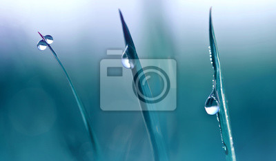 Transparent drops of water dew on grass close up.Natural background.