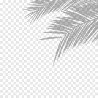 Sticker Transparent shadow overlay effect. Vector of transparent shadows of palm leaf. Vector illustration