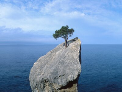 Sticker  tree that fights for life on a rock