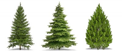 Sticker Trees Isolated on white Background. Pine Tree, White Spruce, Bosnian Pine. High Resolution