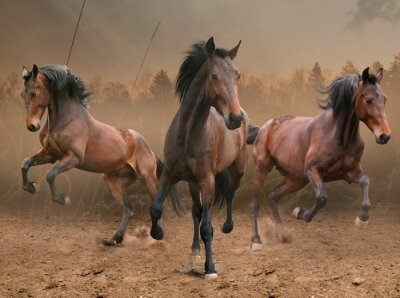Sticker trois chevaux