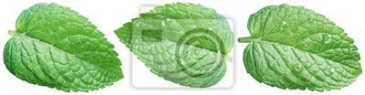 Sticker Trois feuilles de menthe verte ou feuilles de menthe avec de l'eau tombe sur fond blanc.