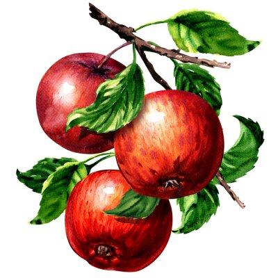 Trois pommes rouges mûres avec des feuilles sur la branche isolées, illustration d'aquarelle sur blanc