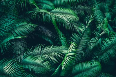 Sticker tropical forest natural background, nature scene in green tone style