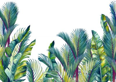 Sticker Tropical palm trees and banana leaves. Isolated watercolor background.