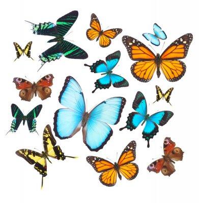 Sticker Tropicale, papillons, ensemble