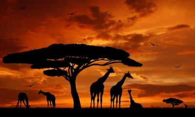 troupeau de girafes dans le soleil couchant