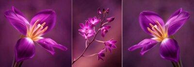 Sticker Tulipany i Orchidea