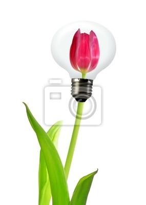 tulipe dans le bulbe