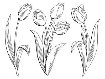 Sticker Tulipe, fleur, graphique, noir, blanc, isolé, croquis, Illustration, vecteur