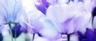 Sticker tulipes cyan violet ultra léger