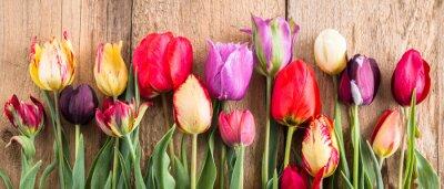 Sticker tulipes multicolores sur un fond en bois, bannière, vieilles planches, fleurs de printemps, tulipes sur les planches