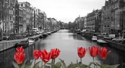 Sticker tulipes rouges dans amsterdam