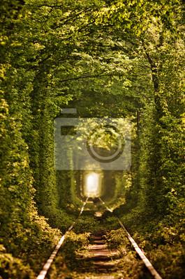 Tunnel naturel de l'amour formée par les arbres en Ukraine