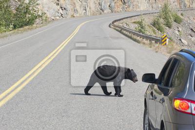Un ours noir traversant la route en Alaska Colombie-Britannique