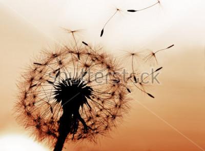 Sticker Un pissenlit de soufflant grays dans le vent.