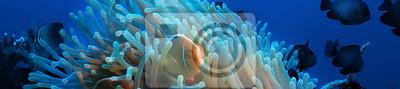 Sticker underwater scene / coral reef, world ocean wildlife landscape