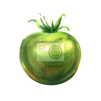 Une tomate verte fraîche isolé, illustration aquarelle sur blanc