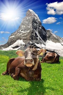 Vache couchée dans le meadow.In le fond Alpes Matterhorn-Suisse