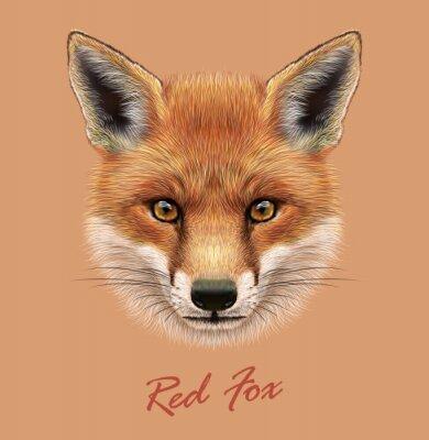 Sticker Vecteur illustratif portrait d'un renard rouge