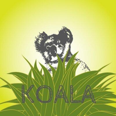 Sticker Vecteur, Illustration, koala, ours, eucalyptus, feuilles Koala. Eucalyptus.