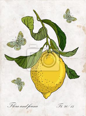 Vecteur, main, dessin, citron, branch., Botanique, Illustration.