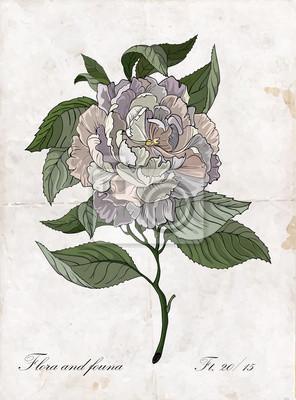 Vecteur main dessin rose branch.Botanical illustration.