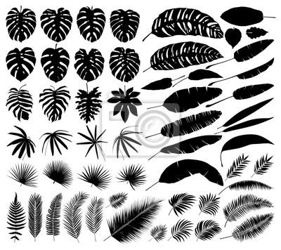 Sticker Vecteur série de silhouettes de feuilles tropicales, éléments isolés botaniques