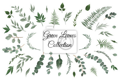 Sticker Vector designer elements set collection of greeng leaves herbs in watercolor style.