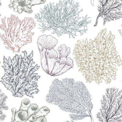 Sticker Vector seamless pattern with hand drawn ocean plants and coral reef elements in sketch style.
