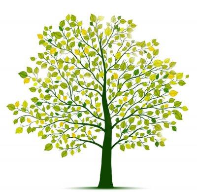 Sticker Vert, arbre, isolé