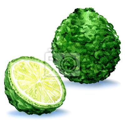 Vert, bergamote, fruit, entier, coupure, isolé, aquarelle, Illustration