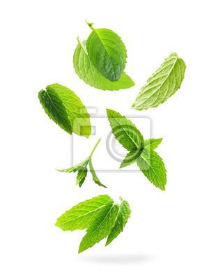 Sticker Vert de feuilles de menthe isolé sur un fond blanc.