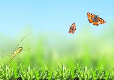 Sticker Vert, herbe, chenille, papillon