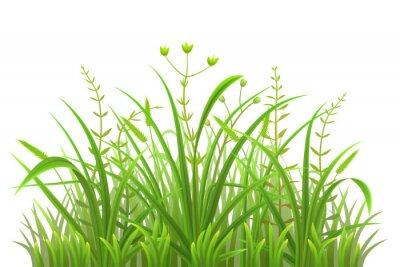 Sticker Vert, herbe, modèle, blanc, fond