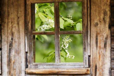 Sticker Vieux, bois, fenêtre, cadre, ressort, fleurir, Arbres