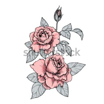 Sticker Vignette élégante avec des roses roses. Main dessinée illustration vectorielle isolé dans un style vintage
