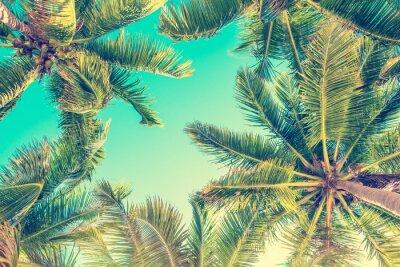 Sticker Vue de ciel bleu et palmiers d'en bas, style vintage, fond de l'été