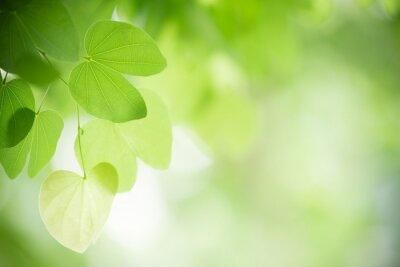 Sticker Vue de nature agrandi de feuille verte sur fond de verdure floue dans le jardin avec espace de copie à l'aide de fond paysage végétal vert naturel, écologie, notion de fond d'écran frais.