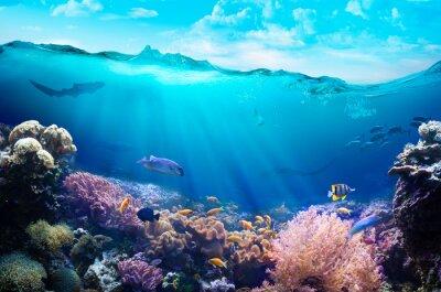 Sticker Vue sous-marine du récif de corail.