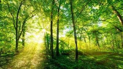 Sticker Wald Panorama im goldenen Sonnenschein