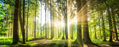 Sticker Waldpanorama avec des rayons de soleil