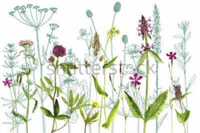 Sticker watercolor drawing wild plants with flowers,buds and leaves, painted botanical illustration in vintage style, color floral template, hand drawn natural background